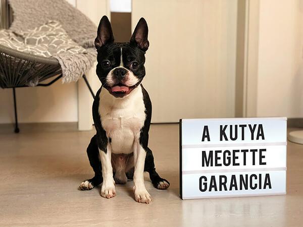 A kutya megette garancia